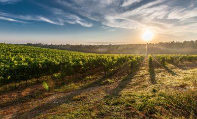 Windsor Essex County's Top Wineries